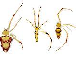 Die spinnen doch!: Forscher ehren Promis - mit Spinnennamen
