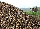 Heißer Herbst für Rübenbauern: Brüssel kassiert die Zuckerquote