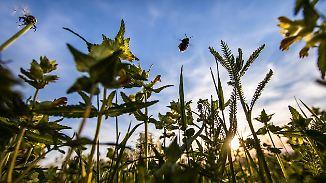 Weltweite Hungersnöte drohen: Massives Insektensterben gefährdet Nahrungsketten