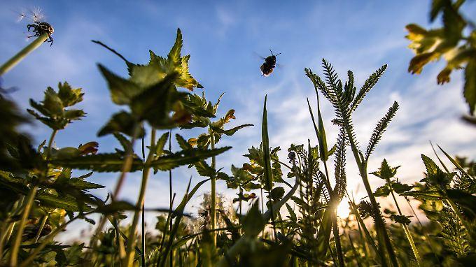 Weltweite Hungersnöte drohen: Massives Insektensterben bedroht Nahrungsketten