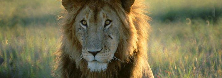 National Geographic: Wilde Tierwelt - Überraschungsangriffe