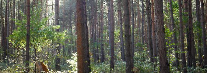 Eigentümer sind dafür verantwortlich, dass ihr Wald erhalten bleibt.