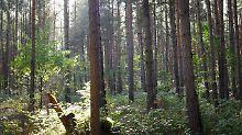 Was zu beachten ist: Wenn der Wald ruft