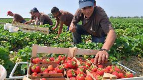 Lohndumping und Ausbeutung: EU kämpft gegen Billigarbeiter