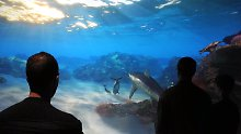Eröffnung in New York: Virtuelle Unterwasserwelt ersetzt Aquarium