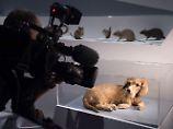 Tierisch beste Freunde: Menschen und ihre Haustiere oder umgekehrt