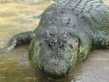 n-tv Dokumentation: Riesen-Krokodile - Natur außer Kontrolle