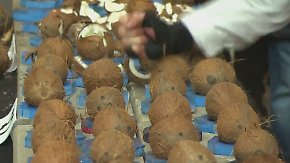 Tag der Weltrekorde in Hamburg: Mann zerschlägt 123 Kokosnüsse in einer Minute