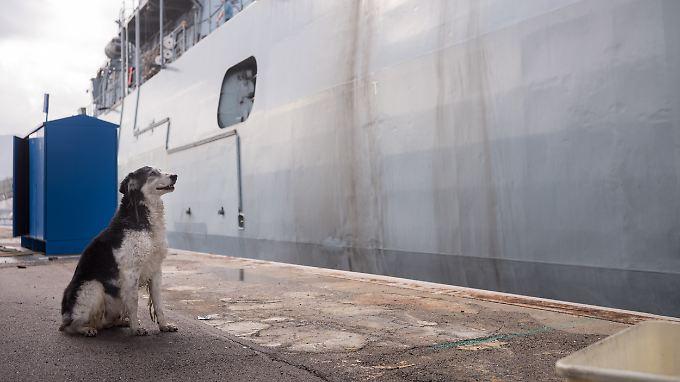Hund vor deutscher Fregatte im Hafen von Palermo.