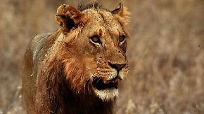 n-tv Dokumentation: Safari-Paparazzi - Wildlife pur