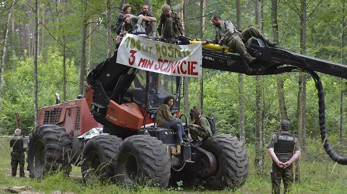 Umweltaktivisten blockieren aus Protest gegen die Abholzung eine Baumfällmaschine im Bialowieza-Urwald.