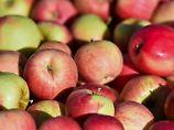 Schlechte Apfelernte in diesem Jahr.