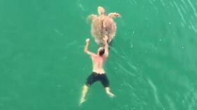 Dramatische Rettung vor Floridas Küste: Fischer angelt versehentlich Schildkröte