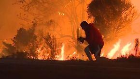 Kaum zu glauben, aber wahr: Autofahrer rettet Hasen vor Waldbrand