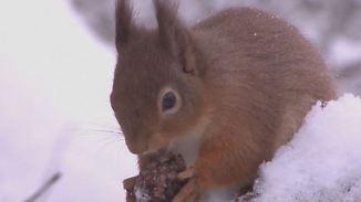 """Auf das """"Was"""" kommt es an: Dürfen Wildtiere im Winter gefüttert werden?"""