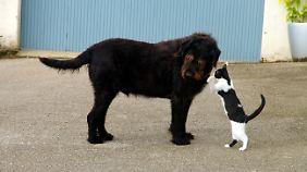 Rätsel um tierische Intelligenz gelöst: Hund oder Katze - wer hat die Schnauze vorn?