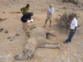In Kenia gewilderter Elefant.