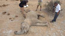 Endlich Hoffnung für Elefanten?: China stoppt Handel mit Elfenbein