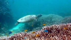 Regeneration kaum noch möglich: Korallenbleiche zerstört gigantische Ökosysteme