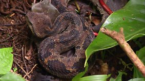 n-tv Dokumentation: Tödliche Schlangen - Expedition Costa Rica