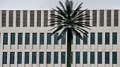 Auch die Palmen an der Rückseite des Gebäudes erwecken Aufmerksamkeit - …