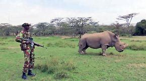 Artenrettung auf Tinder: Paramilitärs bewachen das letzte Weiße Nashorn