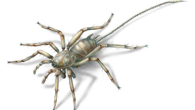 Die Spinne ist 2,5 Millimeter lang, der Schwanz nochmal 3Millimeter.