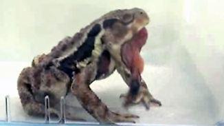 Übelriechende Überlebensstrategie: Käfer furzt sich in die Freiheit