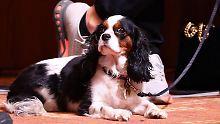 Der Sport-Tag: Lindsey Vonns Hund ist neuer Internetstar