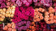 Floristen unter Druck: Discounter testen Onlinemarkt für Blumen