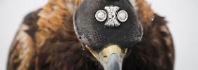 5000 Jahr alte Felszeichnungen zeugen davon, dass schon die Ahnen die Adlerjagd pflegten.