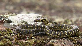 n-tv Dokumentation: Tödliche Schlangen - Expedition Australien