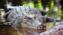 Unterleib und Hände gefressen: Riesiges Krokodil zerfleischt Frau