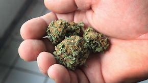 Mediziner kritisieren fehlende Vorgaben: Patienten bleiben auf Kosten für Cannabis sitzen