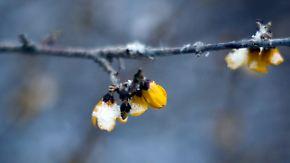 Zu kalt für März: Frühling macht sich zum kalendarischen Start rar