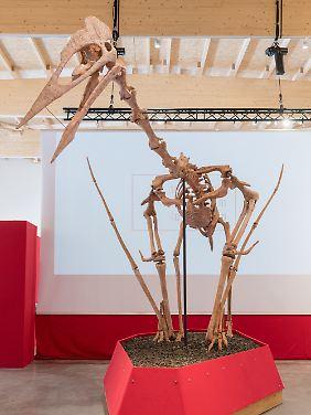 Modell eines Riesenflugsauriers im Dinosaurier-Museum Altmühltal. Der wahrscheinlich größte je entdeckte Flugsaurier mit zwölf Meter Spannweite und einer halben Tonne Gewicht ist am Donnerstag in dem Museum vorgestellt worden.