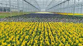 Frühling aus der Fabrik: Roboter lassen Blumen blühen