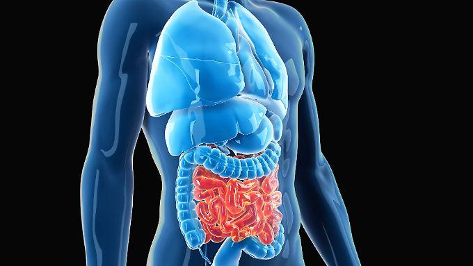 Der Darm beherbergt ein ganzes Ökosystem. Bis zu 100 Billionen Bakterien können dort angesiedelt sein.