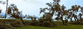 Bäume wurden durch die Böen umgerissen, Strommasten beschädigt.