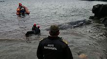 Der Wal wurde an der spanischen Küste angespült.
