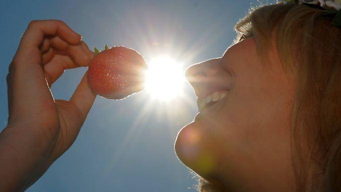 Lecker Erdbeerchen: Was so gut schmeckt, ist nicht die eigentliche Frucht, sondern die Scheinfrucht.