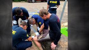 Hai, Bär und Klapperschlange: 20-Jähriger überlebt drei gefährliche Tierattacken