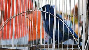 Auf der Jagd nach bunten Exoten: In Havanna boomt der illegale Vogelhandel