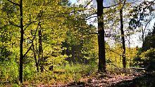 Nachhaltige Forstprogramme: In reichen Ländern wächst die Waldfläche
