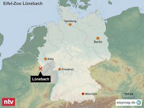 Wildtier-Alarm im Westen: In der Eifel sind mehrere Raubkatzen aus einem Zoo ausgebrochen.