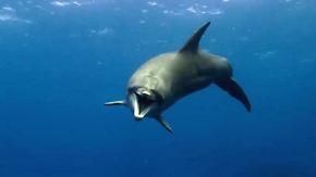 """Disney-Doku """"Delfine"""": Auch unter Wasser ist es nicht leicht, ein Teenie zu sein"""