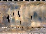 """Keine Spur von """"Opportunity"""": Mega-Staubsturm erfasst fast ganzen Mars"""
