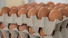 Belastung mit Salmonellen: 120.000 Eier von Rückruf betroffen