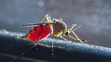 Vierte Generation des Jahres: Trockenheit macht Mücken nichts aus