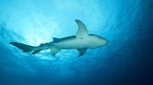 Leichtsinniger Fütterungsversuch: Hai reißt Australierin von Boot